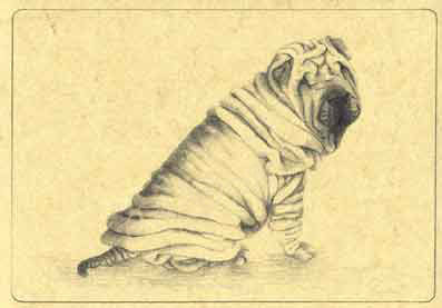 YOUNG SHAR PEI